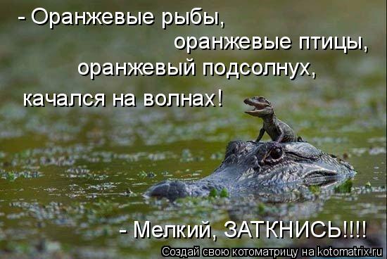 Котоматрица: - Оранжевые рыбы,  оранжевые птицы,  оранжевый подсолнух, качался на волнах! - Мелкий, ЗАТКНИСЬ!!!!