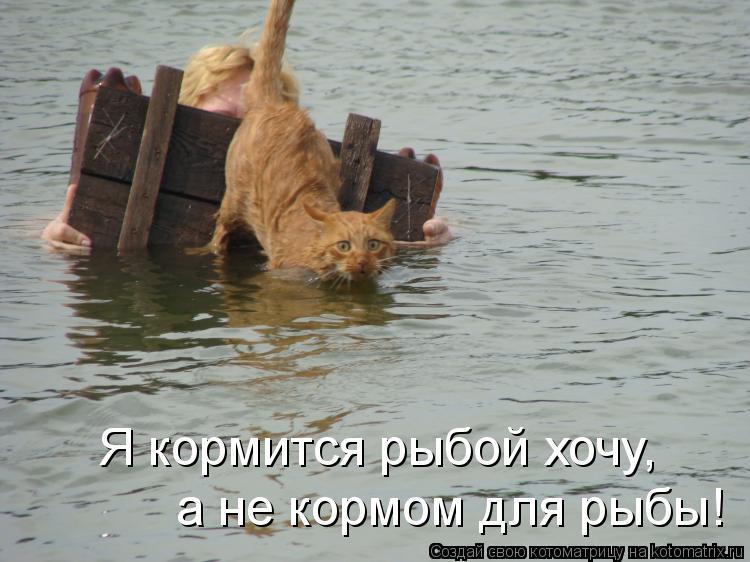 Котоматрица: Я кормится рыбой хочу, а не кормом для рыбы!