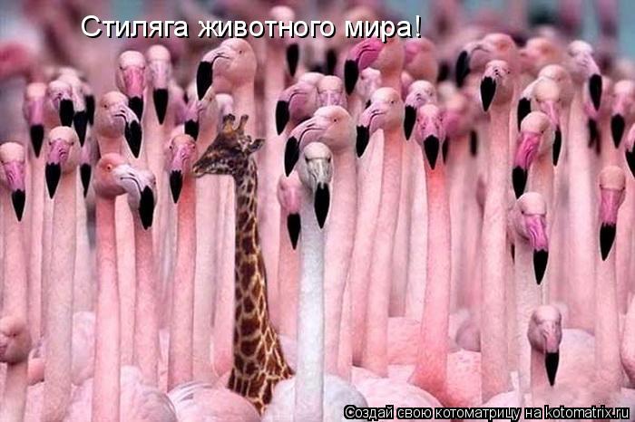 Котоматрица: Стиляга животного мира!