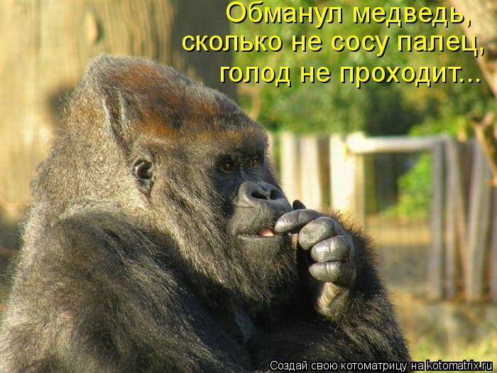 Котоматрица: Обманул медведь,  сколько не сосу палец,  голод не проходит...