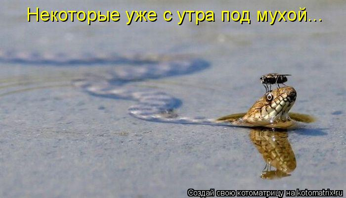 Котоматриця!)))) - Страница 4 554233