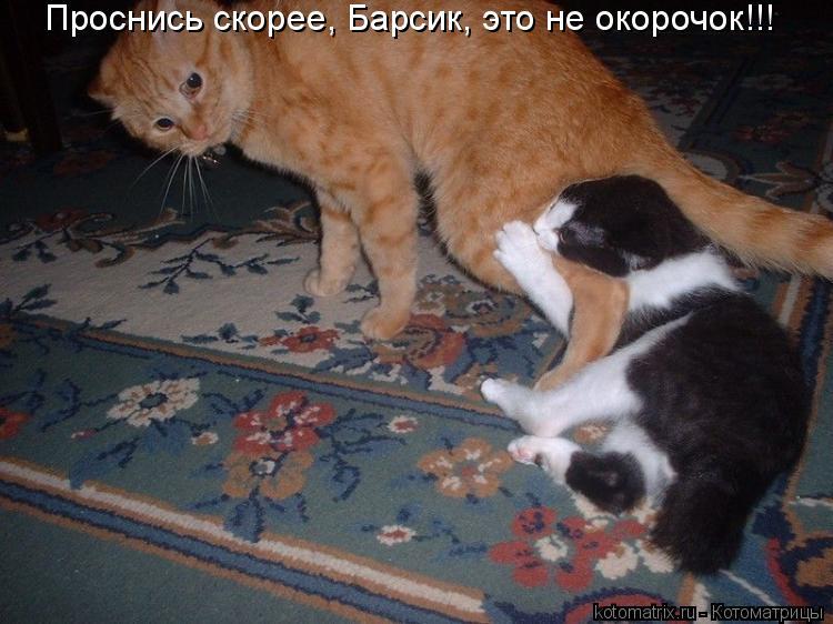 Котоматрица: Проснись скорее, Барсик, это не окорочок!!!