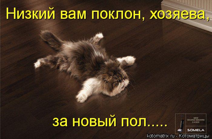 Котоматрица: Низкий вам поклон, хозяева, за новый пол.....