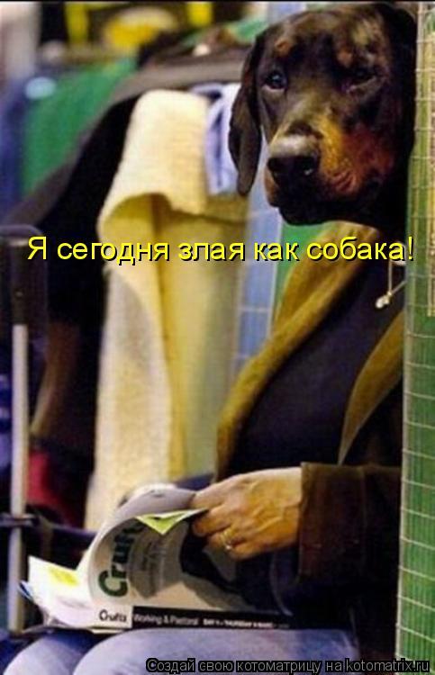 Котоматрица: Я сегодня злая как собака!