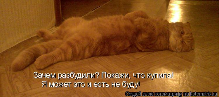 Котоматрица: Зачем разбудили? Покажи, что купила! Я может это и есть не буду!