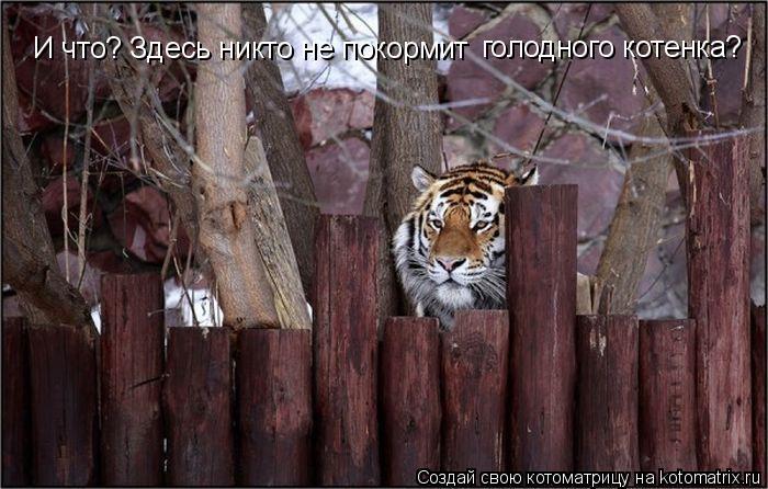 Котоматрица: И что? Здесь никто не покормит  голодного котенка?