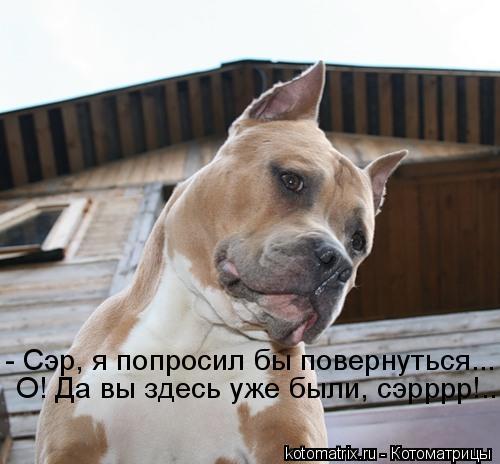 http://kotomatrix.ru/images/lolz/2010/04/23/554768.jpg