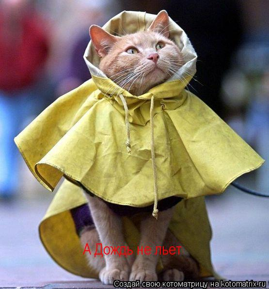 Котоматрица: А Дождь не льет