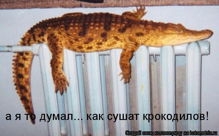 Котоматрица: а я то думал... как сушат крокодилов!