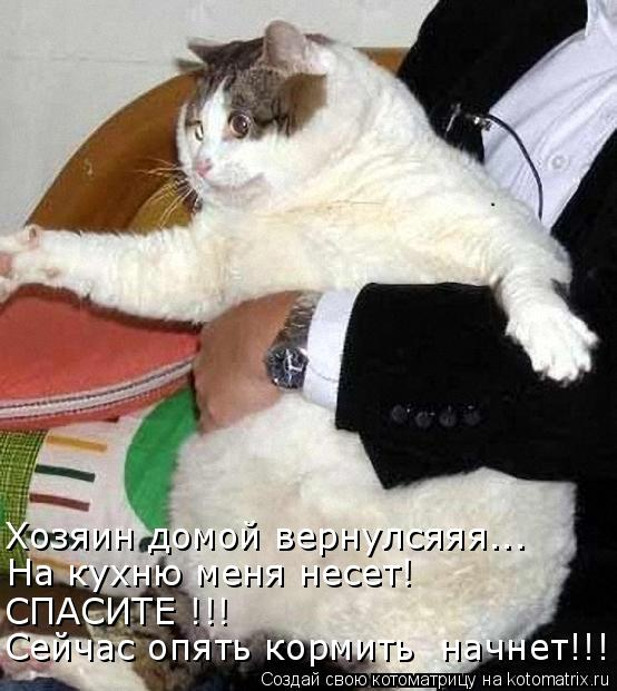 Котоматрица: Хозяин домой вернулсяяя... На кухню меня несет! СПАСИТЕ !!! Сейчас опять кормить  начнет!!!
