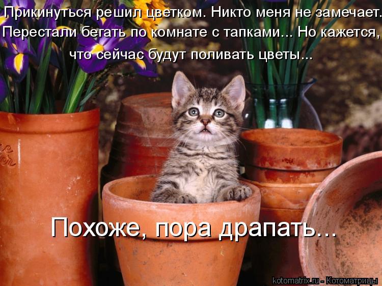 Котоматрица: Прикинуться решил цветком. Никто меня не замечает.  Перестали бегать по комнате с тапками... Но кажется,  что сейчас будут поливать цветы... По