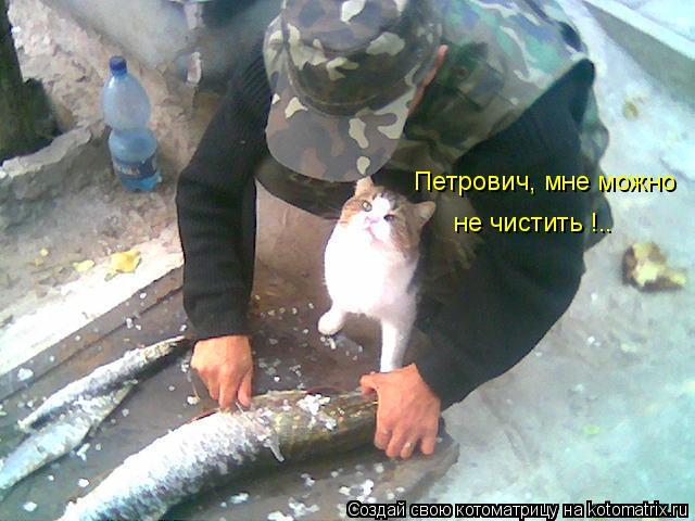 Котоматрица: Петрович, мне можно  не чистить !..