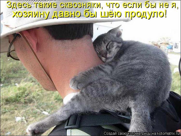 Котоматрица: Здесь такие сквозняки, что если бы не я,  хозяину давно бы шею продуло!