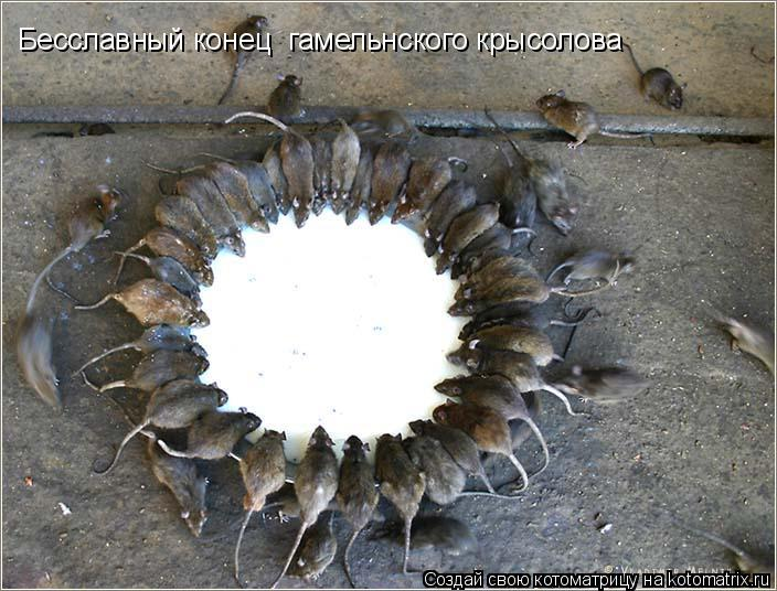 Котоматрица: Бесславный конец  гамельнского крысолова