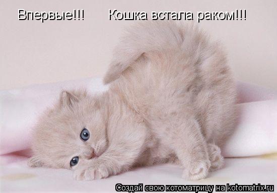 Котоматрица: Впервые!!! Кошка встала раком!!!