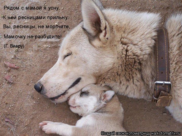 Котоматрица: Рядом с мамой я усну,  К ней ресницами прильну. Вы, ресницы, не моргните, Мамочку не разбудите! (Г. Виеру)