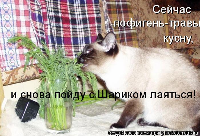 Котоматрица: Сейчас  пофигень-травы кусну, и снова пойду с Шариком лаяться!