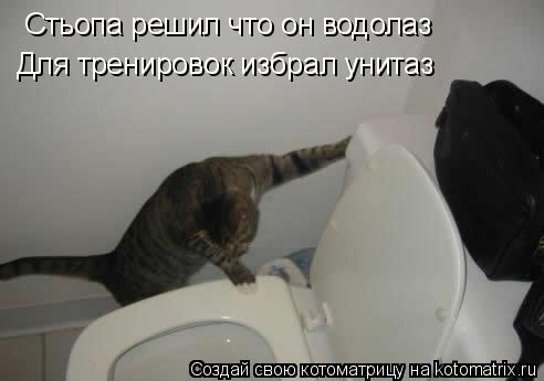 Котоматрица: Стьопа решил что он водолаз Для тренировок избрал унитаз