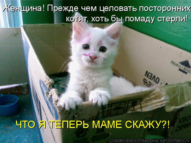 Котоматрица: Женщина! Прежде чем целовать посторонних котят, хоть бы помаду стерли! ЧТО Я ТЕПЕРЬ МАМЕ СКАЖУ?!