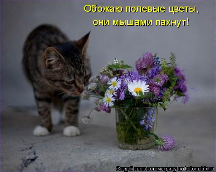 Котоматрица: Обожаю полевые цветы,  они мышами пахнут!