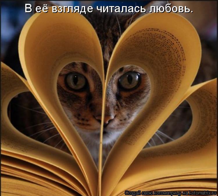 Котоматрица: В её взгляде читалась любовь.