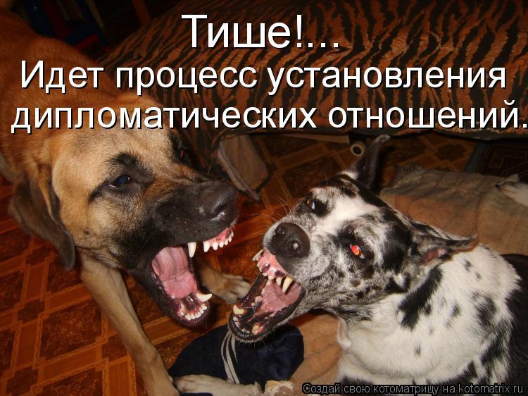 Котоматрица: Тише!... Идет процесс установления дипломатических отношений...