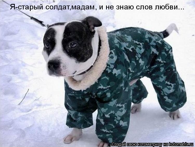 Котоматрица: Я-старый солдат,мадам, и не знаю слов любви...