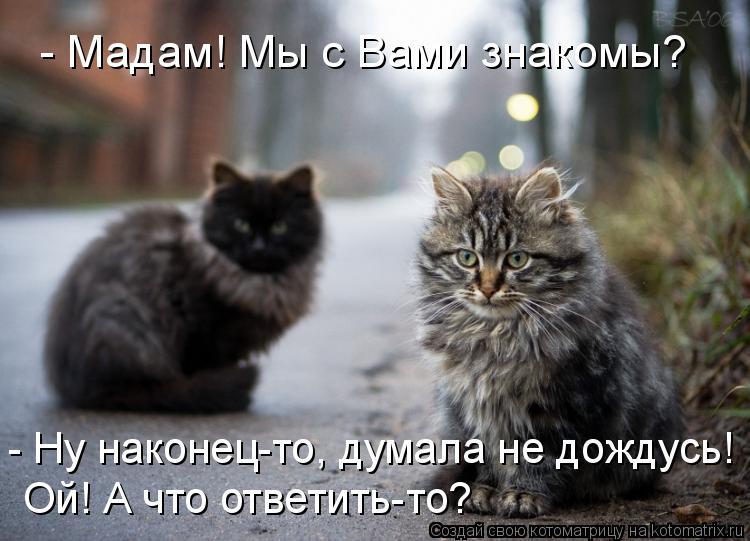 Котоматрица: - Мадам! Мы с Вами знакомы? - Ну наконец-то, думала не дождусь!  Ой! А что ответить-то?