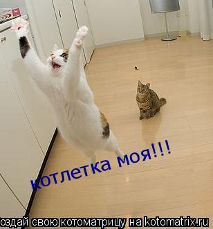 Котоматрица: котлетка моя!!!
