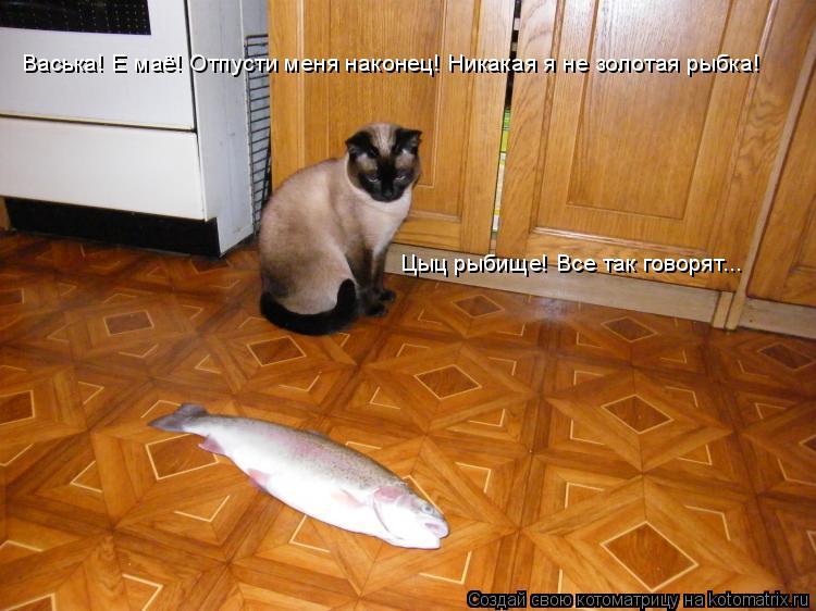 Котоматрица: Васька! Е маё! Отпусти меня наконец! Никакая я не золотая рыбка! Цыц рыбище! Все так говорят...