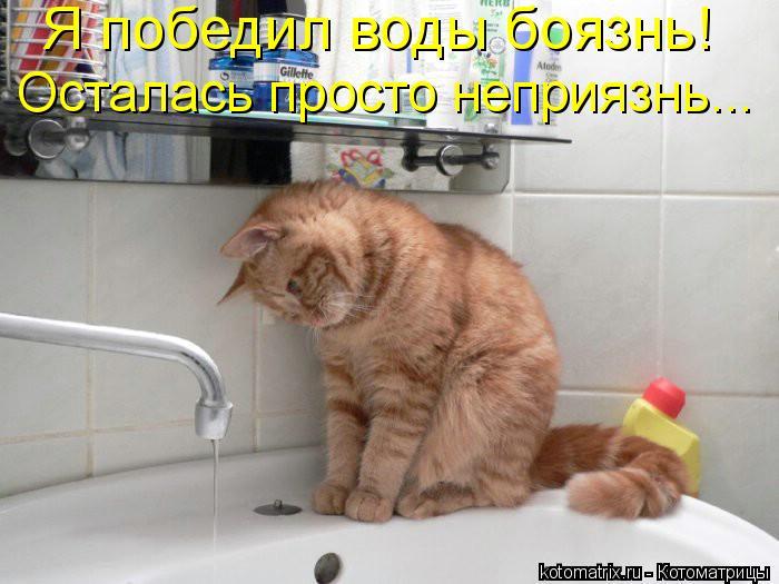 Котоматрица: Я победил воды боязнь!  Осталась просто неприязнь...