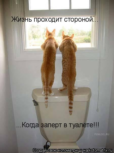 Котоматрица: Жизнь проходит стороной... ...Когда заперт в туалете!!!