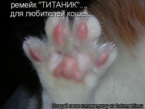 """Котоматрица: ремейк """"ТИТАНИК"""".... для любителей кошек..."""
