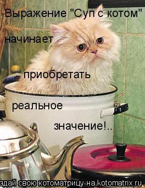 """Котоматрица: начинает приобретать реальное значение!.. Выражение """"Суп с котом"""""""