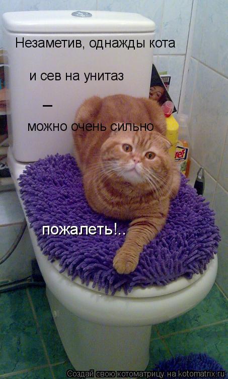 Котоматрица: Незаметив, однажды кота и сев на унитаз _ можно очень сильно пожалеть!..