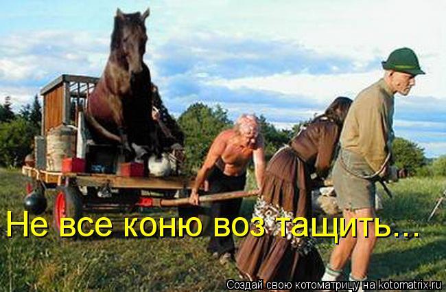 Котоматрица: Не все коню воз тащить...