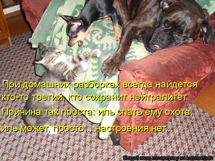Котоматрица: При домашних разборках всегда найдется  Причина так проста: иль спать ему охота,   иль может, просто,…. настроения нет…..  кто-то третий, кто с