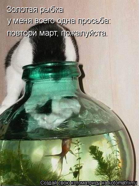 Котоматрица: Золотая рыбка  у меня всего одна просьба: повтори март, пожалуйста.