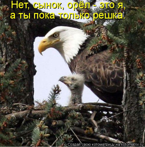 Котоматрица: Нет, сынок, орёл - это я,  а ты пока только решка.