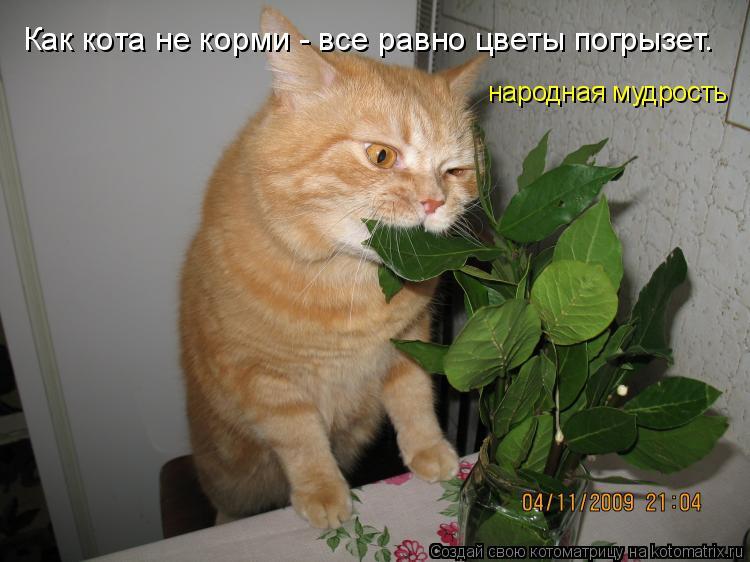 Котоматрица: Как кота не корми - все равно цветы погрызет.  народная мудрость