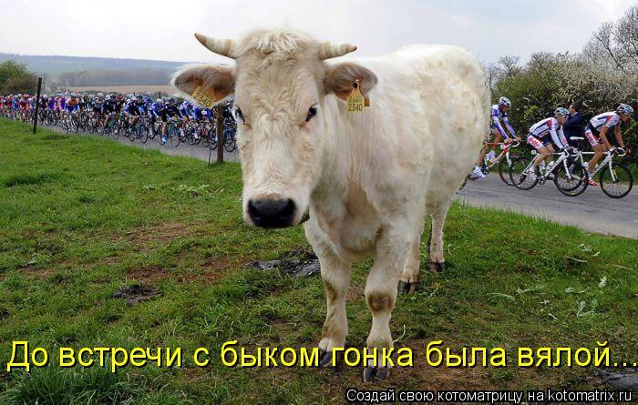 Котоматрица: До встречи с быком гонка была вялой...