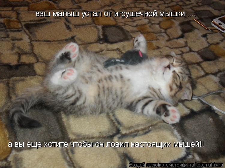 Котоматрица: ваш малыш устал от игрушечной мышки .... а вы еще хотите чтобы он ловил настоящих мышей!!
