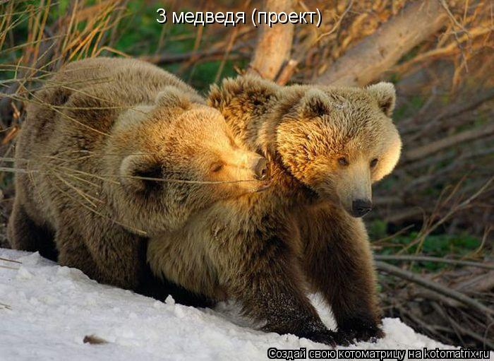 Котоматрица: 3 медведя (проект)