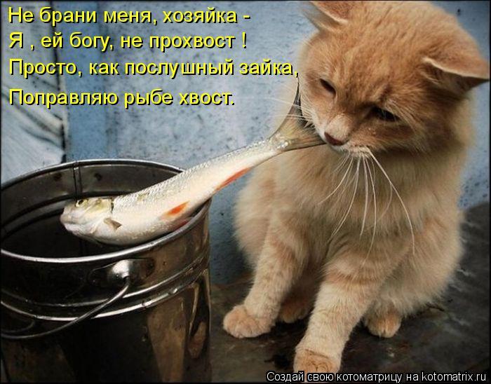 Котоматрица: Не брани меня, хозяйка - Я , ей богу, не прохвост ! Просто, как послушный зайка, Поправляю рыбе хвост.