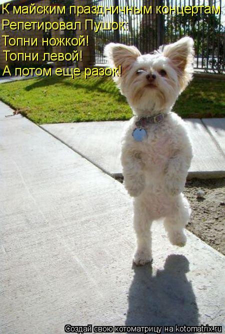 Котоматрица: К майским праздничным концертам Репетировал Пушок: Топни ножкой! Топни левой! А потом еще разок!
