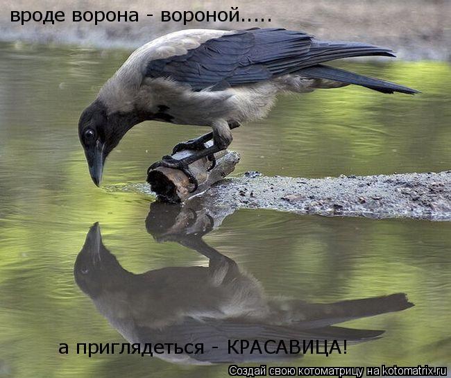 Котоматрица: вроде ворона - вороной..... а приглядеться - КРАСАВИЦА!