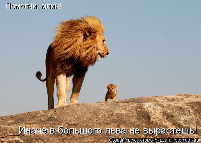 Котоматрица: Помолчи, млин! Иначе в большого льва не вырастешь!