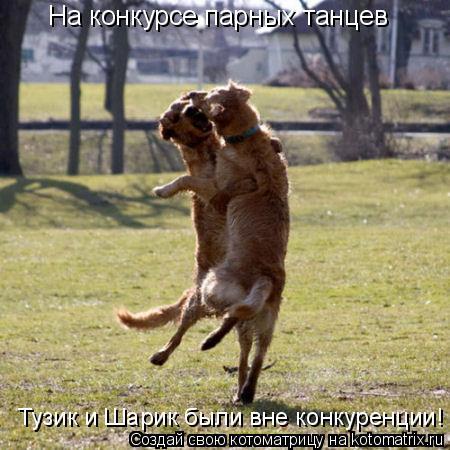 Котоматрица: На конкурсе парных танцев Тузик и Шарик были вне конкуренции!
