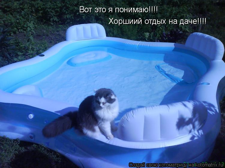 Котоматрица: Вот это я понимаю!!!! Хоршиий отдых на даче!!!!
