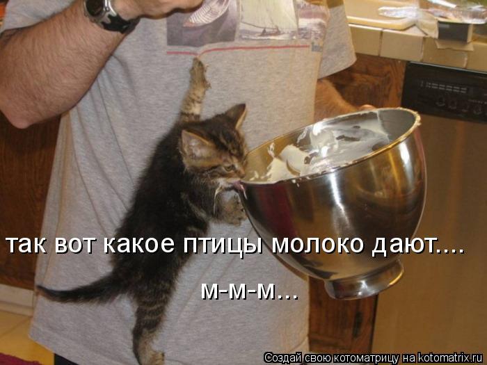 Котоматрица: так вот какое птицы молоко дают.... м-м-м...